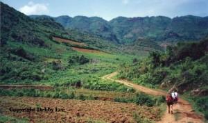 Verdant Vietnam Land