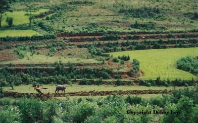 Vietnam Verdant Land