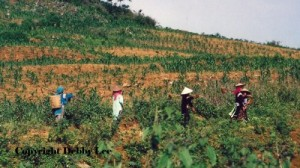 Vietnam Women Fields 1