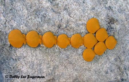 Camino de Santiago Yellow Arrow of Scallop Shells