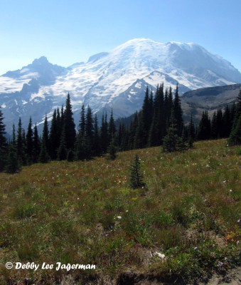 Mt Rainier Northern Loop Mountain Meadow