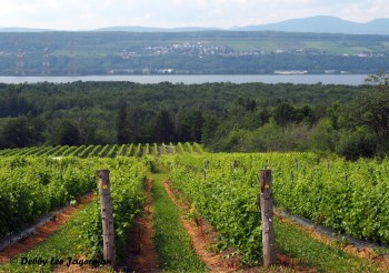 Vignoble Isle de Bacchus Vineyards Ile d'Orleans