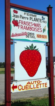 Strawberries Business Sign Ile d'Orleans