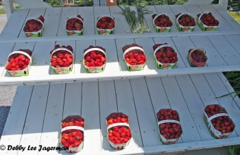 Strawberries Display Ile d'Orleans