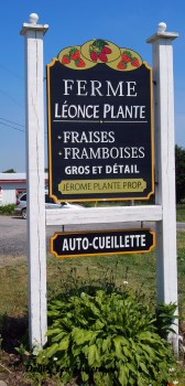 Strawberries Ferme Sign Ile d'Orleans