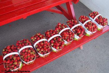 Strawberries Ile d'Orleans