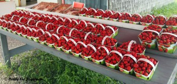 Strawberries Pies Ile d'Orleans