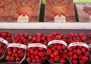 Strawberries Pies2 Ile d'Orleans
