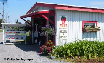 Strawberries Roadside Shop Ile d'Orleans