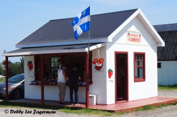 Strawberries Roadside Stand Ile d'Orleans