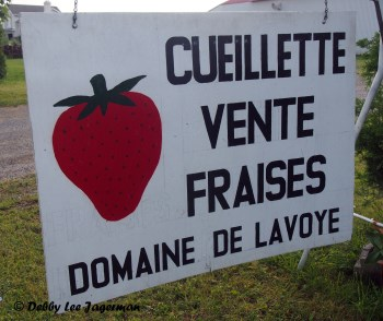 Strawberries Sale Sign Ile d'Orleans