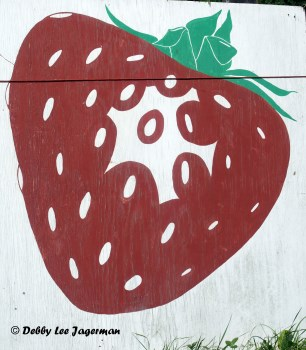 Strawberries Sign Ile d'Orleans