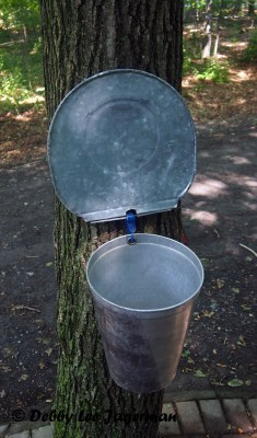 Richard Boily Maple Syrup Bucket Ile d'Orleans