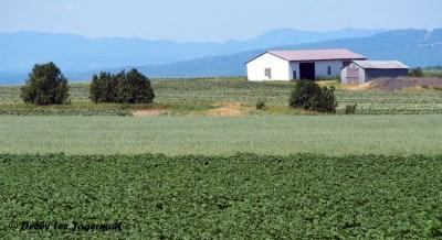 Ile d'Orleans Scenery Farmland