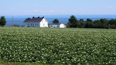 Ile d'Orleans Landscape Farmland