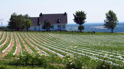 Ile d'Orleans Farmland Scenery