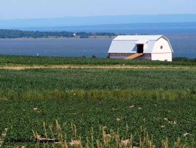 Ile d'Orleans Water and Farmland Scenery