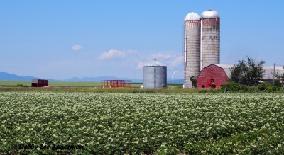 Ile d'Orleans Farmland