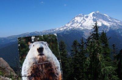 Gobblers Knob Mt Rainier Punxsutawney Phil