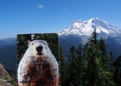 Gobbler's Knob Mt Rainier Punxsutawney Phil