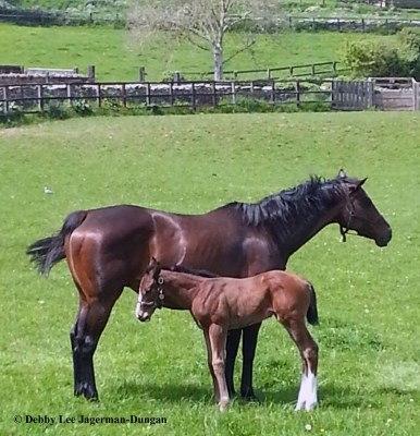 Cotswolds Horses
