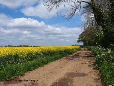 Cotswolds Dirt Road Rapeseed