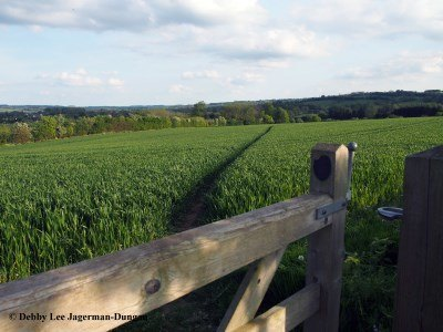 Cotswolds Path Through Crops