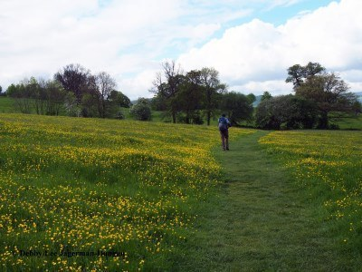 Cotswolds Wildflower Grass Path