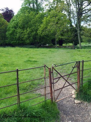 Cotswolds Gate Grass Big Trees