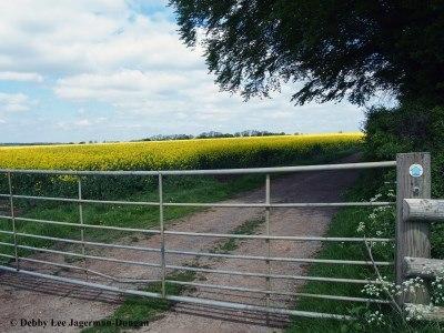 Cotswolds Gate Rapeseed Field