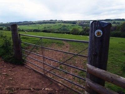 Cotswolds Gate Sheep