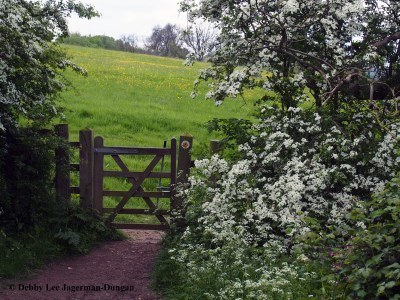 Cotswolds Gate Wildflower Fields