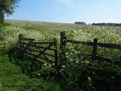 Cotswolds Gate Wildflowers Field