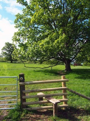 Cotswolds Stile Big Trees