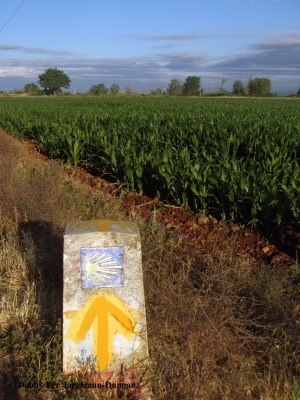 Camino de Santiago Yellow Arrow