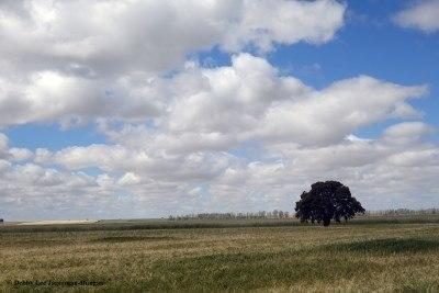 Camino de Santiago Landscape