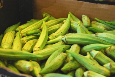 The food of hispaniola haiti and the dominican republic food freeway okra a popular ingredient in haitian cooking forumfinder Images