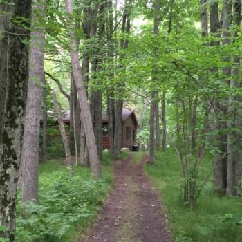 Cabin Trail