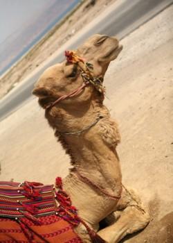 Camel Angle