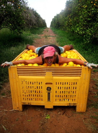 The Little Backpacker fruit picking in Australia