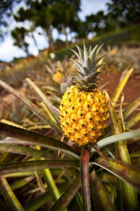 pineapple photo credit Ha_Wee Flickr Creative Commons