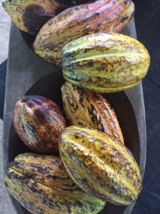 Cacoa Pods