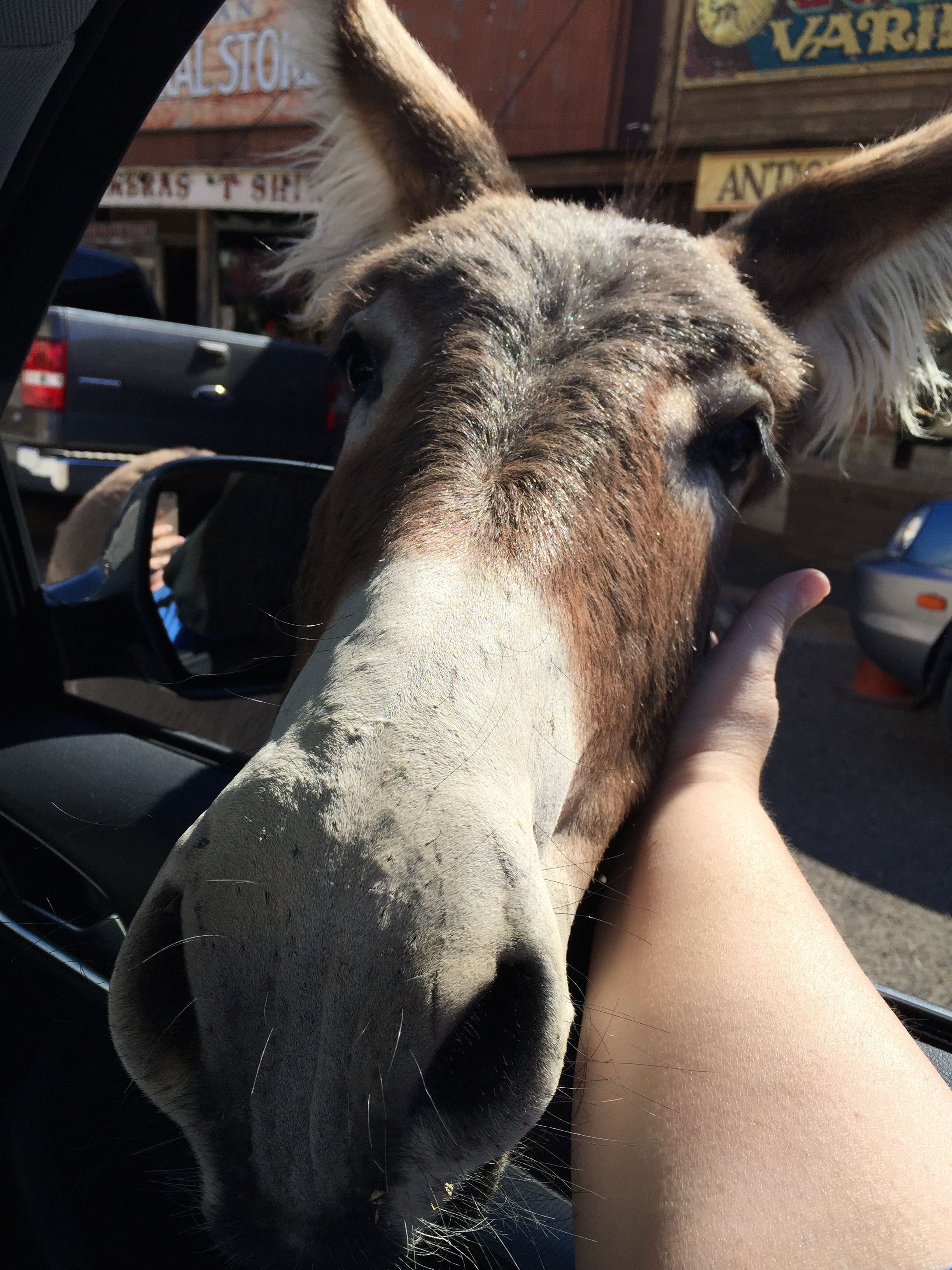 Oatman, AZ – Wild Burros on Historic Route 66