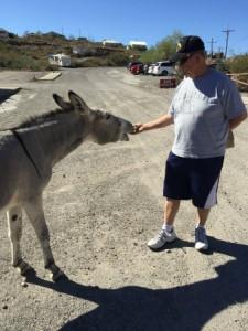 Dad Feeding Wild Burro