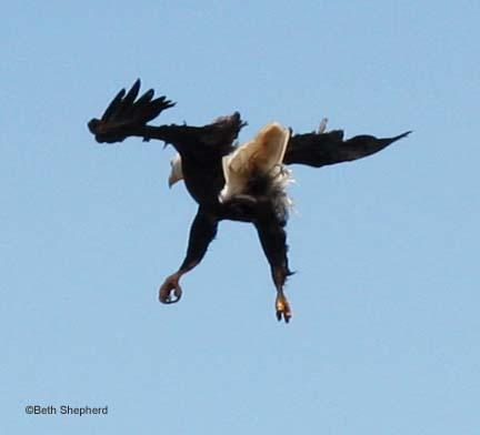 eagle landing Salt Creek County Park