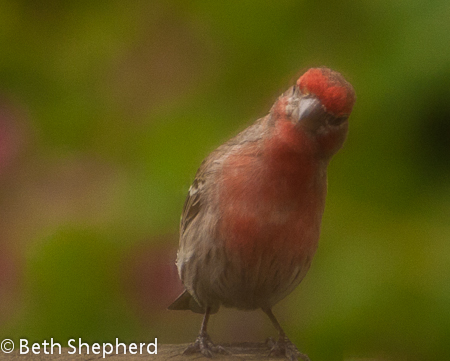 Huh, what thinks the finch