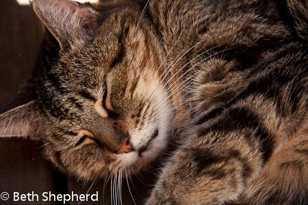 Maggie, Magnolia, cat