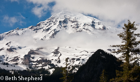 The flora and fauna of Mt. Rainier
