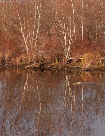 Seattle's Arboretum water trail