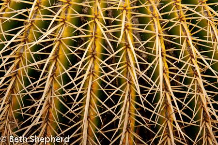 cactus needles